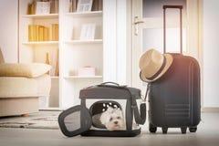 Cão que senta-se em seu transportador Imagens de Stock