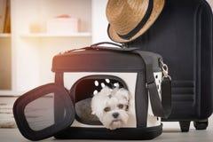 Cão que senta-se em seu transportador Imagens de Stock Royalty Free