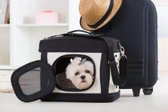 Cão que senta-se em seu transportador Fotografia de Stock Royalty Free