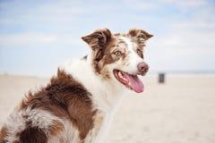 Cão que senta-se em um banco na praia Foto de Stock