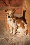 Cão que senta-se fora pela construção antiga Fotografia de Stock