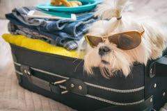 Cão que senta-se na mala de viagem Fotos de Stock Royalty Free