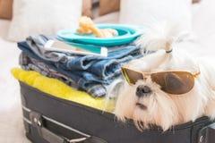 Cão que senta-se na mala de viagem Fotografia de Stock