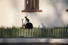 Cão que senta-se na parte traseira da mulher Fotografia de Stock Royalty Free