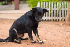Cão que senta-se na terra imagens de stock