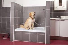 Cão que senta-se no chuveiro no veterinário imagens de stock royalty free