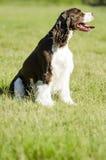 Cão que senta-se no sol Imagem de Stock Royalty Free