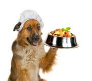 Cão que sere acima uma refeição do gourmet imagem de stock royalty free