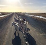 Cão que sledding em Islândia fotos de stock royalty free