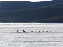 Cão que sledding no lago congelado fotos de stock