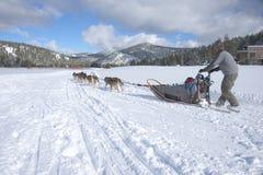 Cão que sledging fotografia de stock