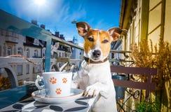 Cão que tem uma ruptura de café Fotografia de Stock Royalty Free