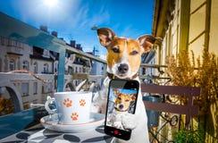 Cão que tem uma ruptura de café e um selfie imagens de stock royalty free