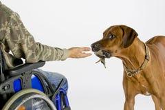 Cão que traz a chave Fotografia de Stock