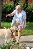 Cão que treina 03 Imagens de Stock