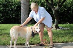 Cão que treina 07 Imagens de Stock Royalty Free