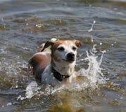 Cão quente Imagens de Stock Royalty Free