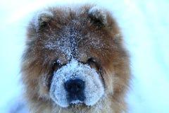 Cão redheaded bonito em uma neve Foto de Stock Royalty Free
