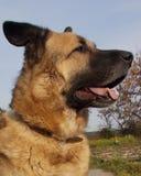 Cão Retrato de encontro ao céu imagem de stock royalty free