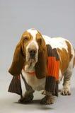 Cão ridículo Fotografia de Stock
