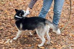 Cão ronco no parque fotografia de stock royalty free