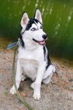 Cão ronco no parque fotografia de stock
