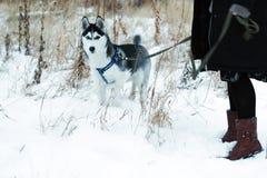 Cão ronco no parque fotos de stock