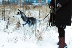 Cão ronco no parque fotos de stock royalty free