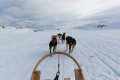 Cão ronco que sledding em Noruega Fotografia de Stock