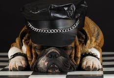 Cão ruim Imagem de Stock