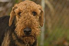 Cão ruim Imagem de Stock Royalty Free