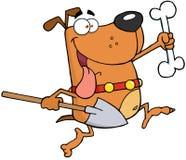 Cão Running com um osso e uma pá Fotos de Stock Royalty Free