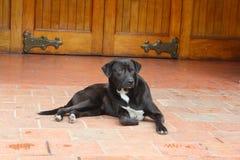 Cão sábio Fotografia de Stock Royalty Free