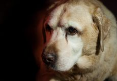 Cão sábio do cão 14 fotos de stock royalty free