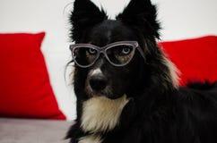 Cão sério do escritório Imagens de Stock Royalty Free