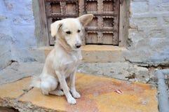 Cão só Imagem de Stock Royalty Free