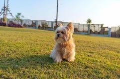 Cão só Foto de Stock