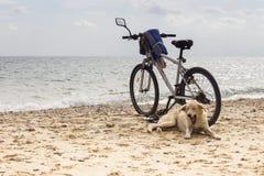 Cão só de bocejo que coloca na praia perto da bicicleta imagens de stock royalty free
