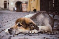 Cão só desabrigado triste na rua da cidade velha imagem de stock