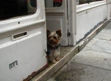 Cão só em Paris foto de stock