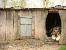 Cão só em seu canil Foto de Stock Royalty Free