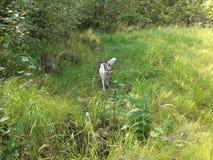 Cão só na floresta imagens de stock