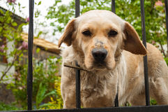 Cão só na gaiola Foto de Stock Royalty Free