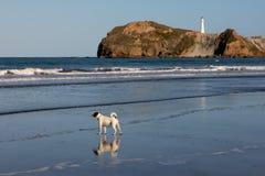 Cão só na praia fotografia de stock