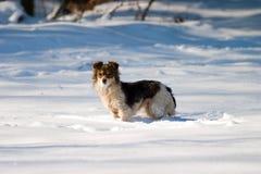 Cão sem nome Fotos de Stock Royalty Free
