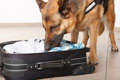 Cão Sniffing que verific a bagagem imagem de stock