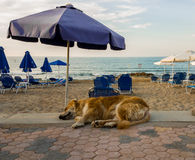 Cão sob o guarda-chuva Imagens de Stock