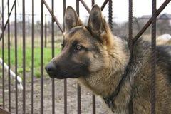 Cão sobre a cerca Fotografia de Stock Royalty Free