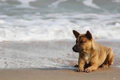 Cão solitário Fotos de Stock Royalty Free
