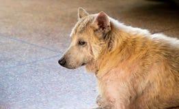 Cão sozinho Foto de Stock Royalty Free
